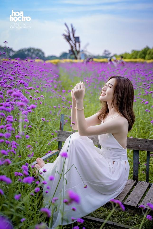 Giới trẻ Hà Nội rủ nhau check-in ở cánh đồng hoa oải hương rộng hàng chục nghìn mét vuông ảnh 3