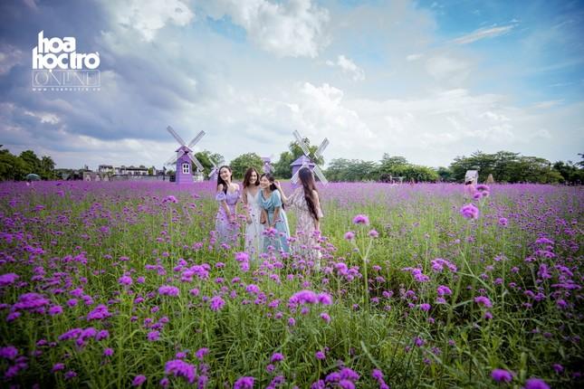 Giới trẻ Hà Nội rủ nhau check-in ở cánh đồng hoa oải hương rộng hàng chục nghìn mét vuông ảnh 1
