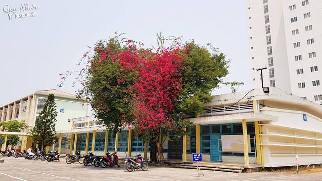 Giới trẻ thích thú với cây trái tim trồng trong khuôn viên của một trường Đại học ảnh 1