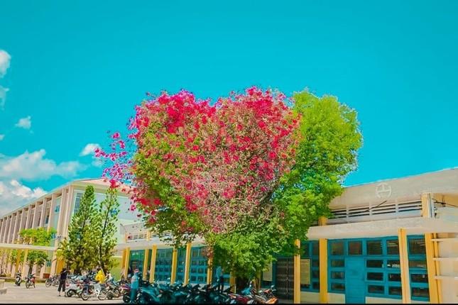 Giới trẻ thích thú với cây trái tim trồng trong khuôn viên của một trường Đại học ảnh 3