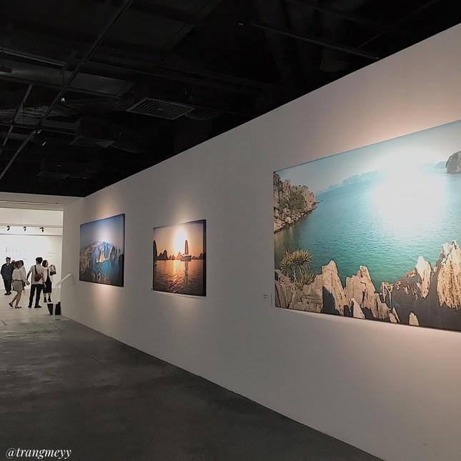 """Triển lãm """"Biển sống"""": Không gian nghệ thuật kì ảo mang vẻ đẹp của biển dành cho giới trẻ ảnh 2"""
