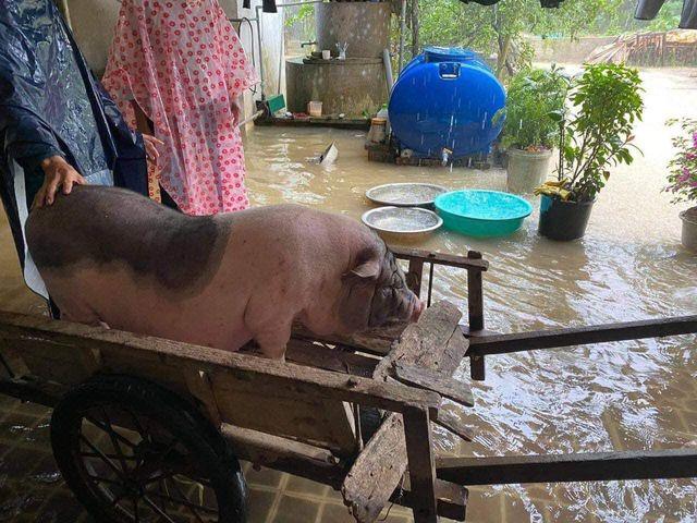 Cảnh tượng xót xa: Nhiều nơi tại Nghệ An ngập sâu trong nước lũ, khu vực biển bị sập bờ kè ảnh 12