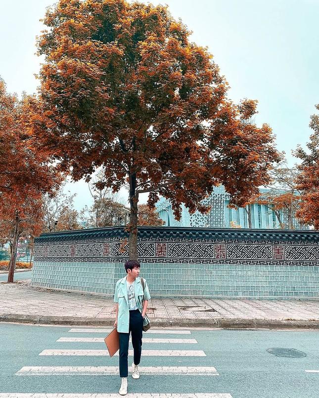 """Con đường lá phong đỏ được mệnh danh """"Seoul giữa lòng Hà Nội"""": Ảnh thực tế khác xa! ảnh 2"""