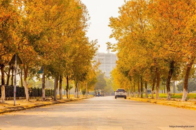 """Con đường lá phong đỏ được mệnh danh """"Seoul giữa lòng Hà Nội"""": Ảnh thực tế khác xa! ảnh 1"""