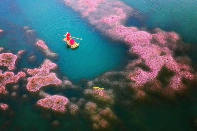 Ngất ngây trước vẻ đẹp của hồ Tảo Hồng ở Lâm Đồng, chụp ảnh ở đây cứ gọi là xuất sắc! ảnh 1