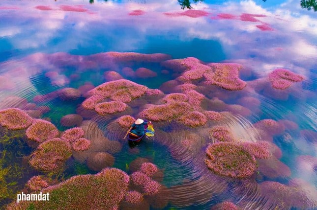 Ngất ngây trước vẻ đẹp của hồ Tảo Hồng ở Lâm Đồng, chụp ảnh ở đây cứ gọi là xuất sắc! ảnh 2