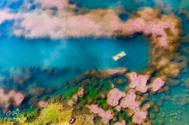 Ngất ngây trước vẻ đẹp của hồ Tảo Hồng ở Lâm Đồng, chụp ảnh ở đây cứ gọi là xuất sắc! ảnh 4