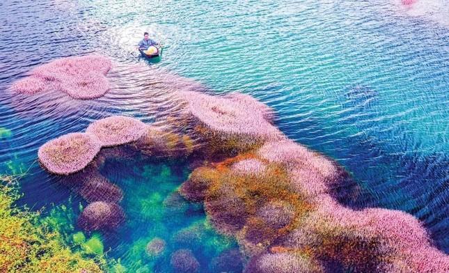 Ngất ngây trước vẻ đẹp của hồ Tảo Hồng ở Lâm Đồng, chụp ảnh ở đây cứ gọi là xuất sắc! ảnh 5