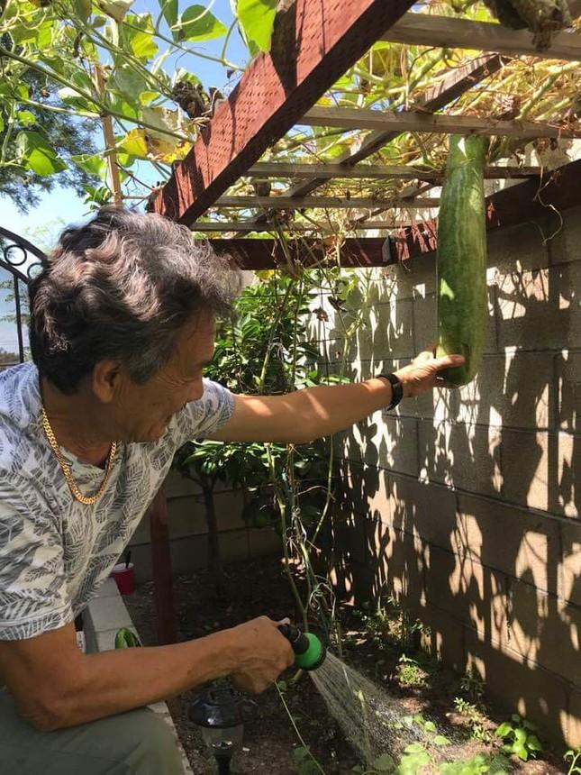 Vườn cây trái tươi tốt ở Mỹ của danh ca Hương Lan ảnh 3