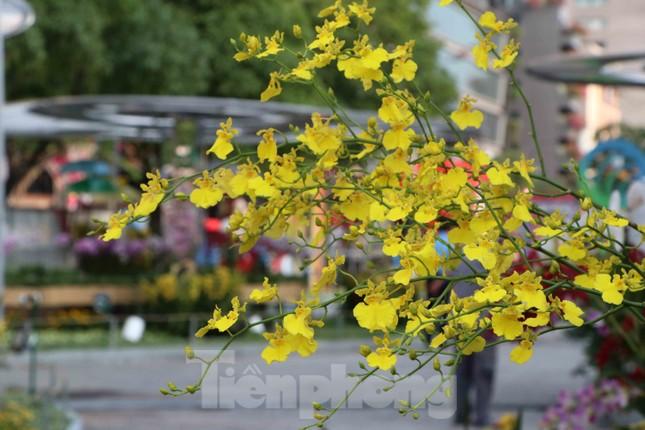 Cận cảnh đường hoa Nguyễn Huệ Tết Nguyên đán 2020 trước giờ khai hội ảnh 6