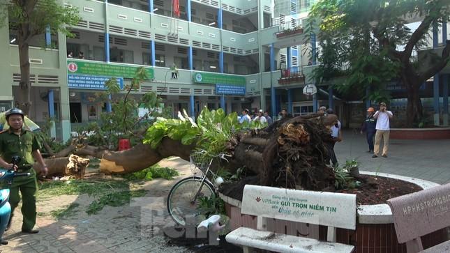Hiện trường cây phượng cổ thụ trong trường học đổ đè học sinh tử vong ảnh 1