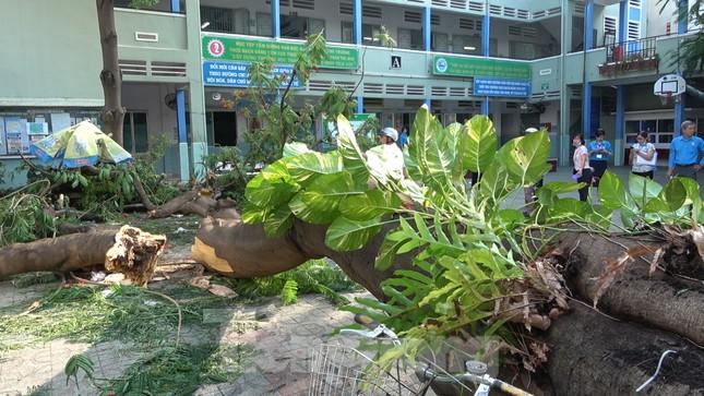 Hiện trường cây phượng cổ thụ trong trường học đổ đè học sinh tử vong ảnh 2