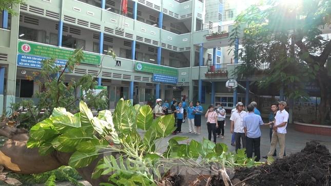 Hiện trường cây phượng cổ thụ trong trường học đổ đè học sinh tử vong ảnh 11