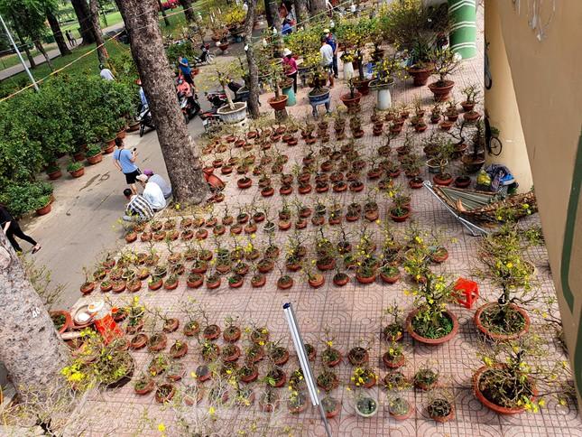 Bonsai mini 'độc lạ' tiền triệu hút khách tại chợ hoa Tết ảnh 1
