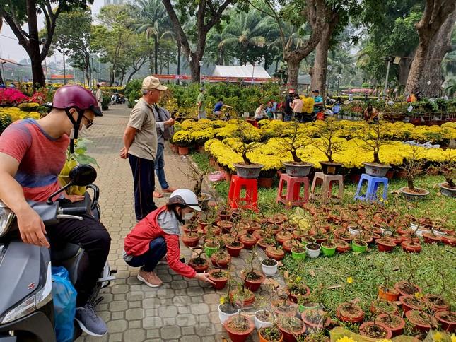 Bonsai mini 'độc lạ' tiền triệu hút khách tại chợ hoa Tết ảnh 4