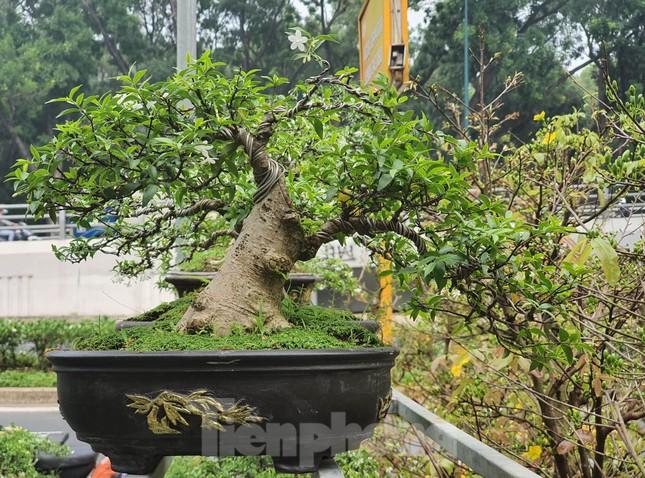 Bonsai mini 'độc lạ' tiền triệu hút khách tại chợ hoa Tết ảnh 7