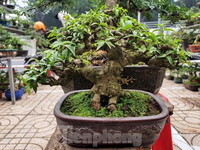 Bonsai mini 'độc lạ' tiền triệu hút khách tại chợ hoa Tết ảnh 8