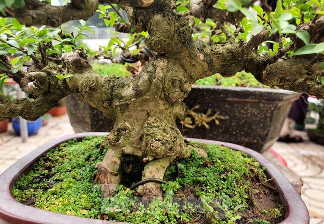 Bonsai mini 'độc lạ' tiền triệu hút khách tại chợ hoa Tết ảnh 9