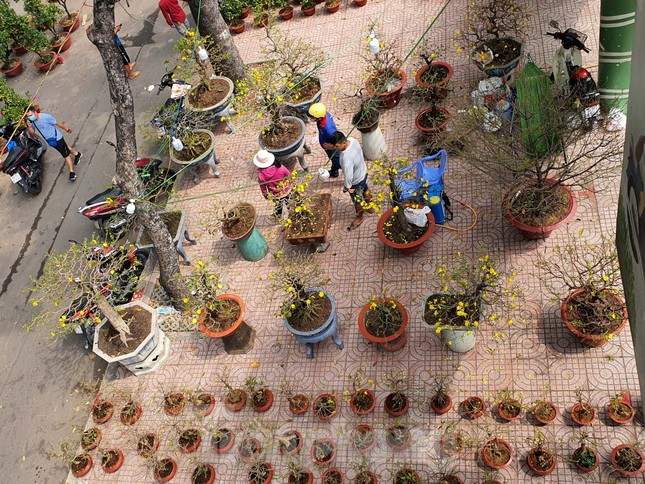 Bonsai mini 'độc lạ' tiền triệu hút khách tại chợ hoa Tết ảnh 12