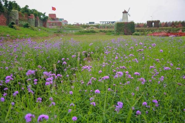 Sai phạm đất đai tràn lan ở 'Thung lũng hoa Hồ Tây' ảnh 3