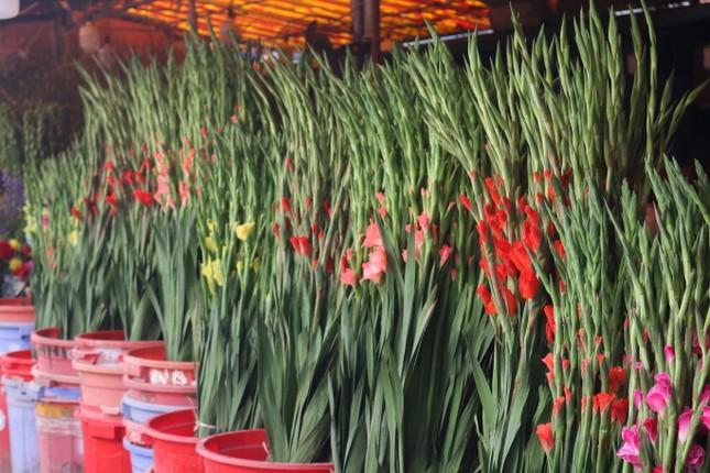 Người trồng hoa, buôn hoa Tết lo ế vì dịch COVID-19 ảnh 3