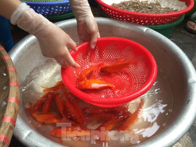 Thị trường chính ngày Ông Công ông Táo: Hoa quả đổ đống giá rẻ, cá chép đắt gấp đôi  ảnh 4