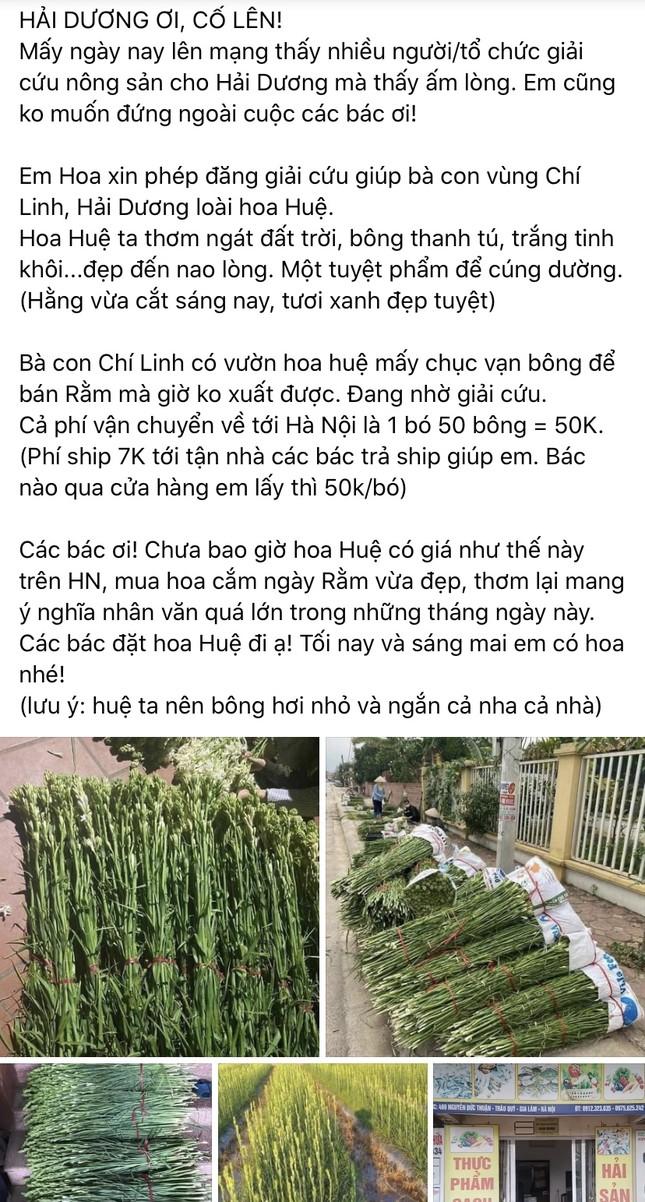 Sát Rằm tháng Giêng, giá hoa ở Hà Nội thấp lạ thường ảnh 4