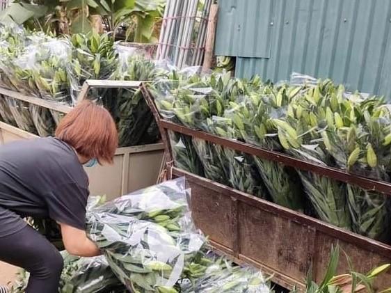 Sát Rằm tháng Giêng, giá hoa ở Hà Nội thấp lạ thường ảnh 2