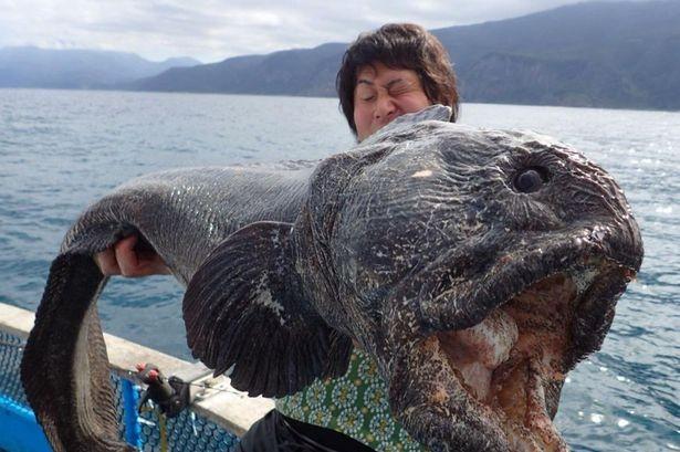 Bắt được quái ngư gần vùng nhiễm xạ Fukushima ảnh 1