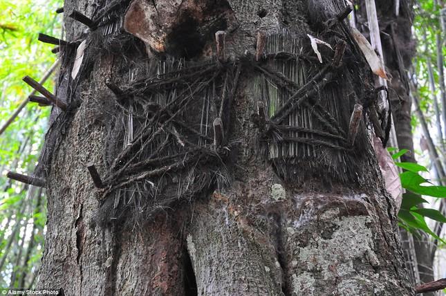Rùng mình với mộ cây hài nhi ở rừng già Indonesia ảnh 4