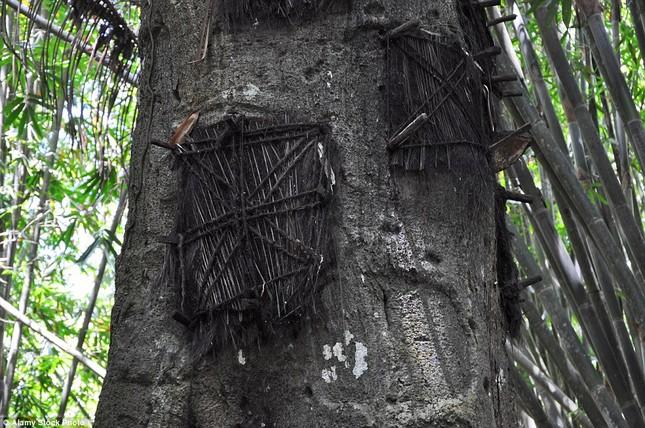 Rùng mình với mộ cây hài nhi ở rừng già Indonesia ảnh 5