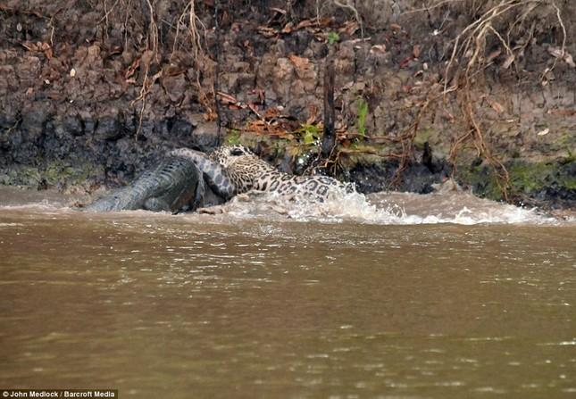 Cận cảnh báo đốm lao xuống sông săn cá sấu khủng ảnh 2