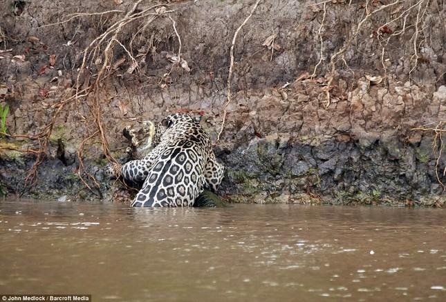 Cận cảnh báo đốm lao xuống sông săn cá sấu khủng ảnh 4