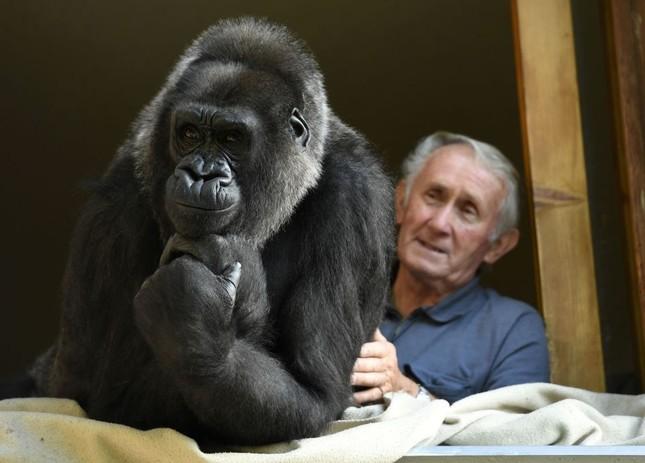 Vợ chồng già nuôi khỉ đột như con suốt 2 thập kỉ ảnh 4
