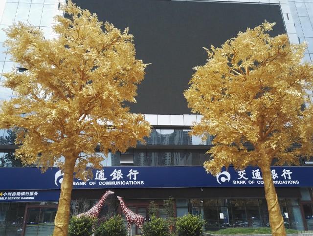 Lóa mắt với hàng cây 'phủ vàng' trước cửa ngân hàng ảnh 1