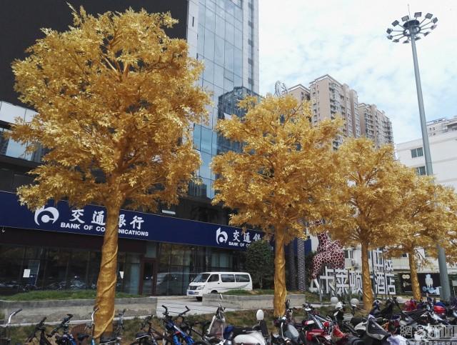 Lóa mắt với hàng cây 'phủ vàng' trước cửa ngân hàng ảnh 2