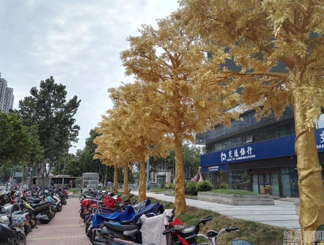 Lóa mắt với hàng cây 'phủ vàng' trước cửa ngân hàng ảnh 3