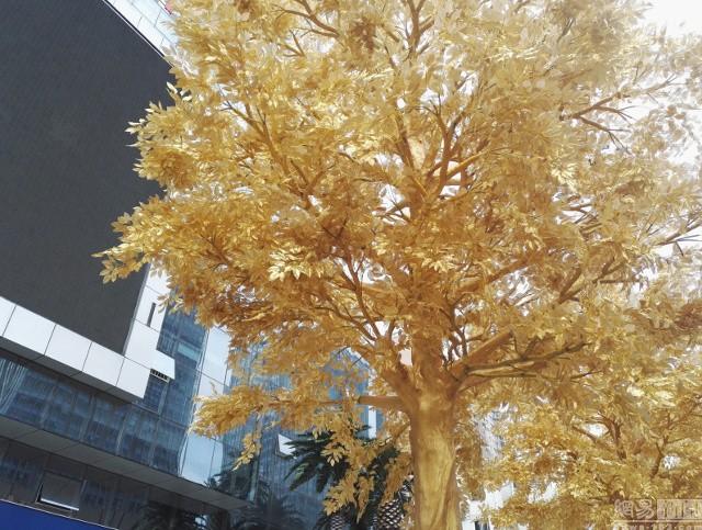 Lóa mắt với hàng cây 'phủ vàng' trước cửa ngân hàng ảnh 4