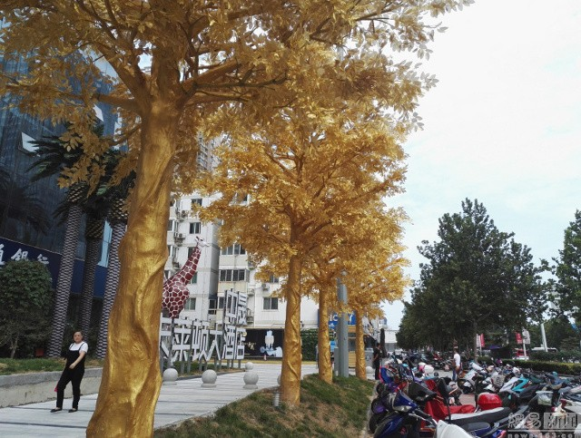 Lóa mắt với hàng cây 'phủ vàng' trước cửa ngân hàng ảnh 5