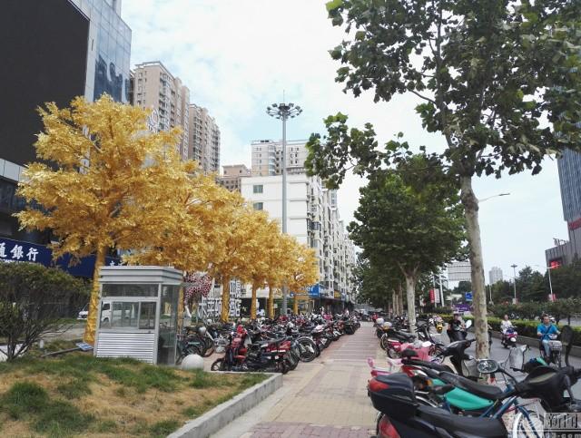 Lóa mắt với hàng cây 'phủ vàng' trước cửa ngân hàng ảnh 6