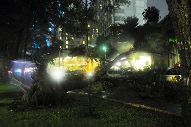 TPHCM: Cây ngã trong cơn mưa, 7 ô tô bị đè bẹp ảnh 1