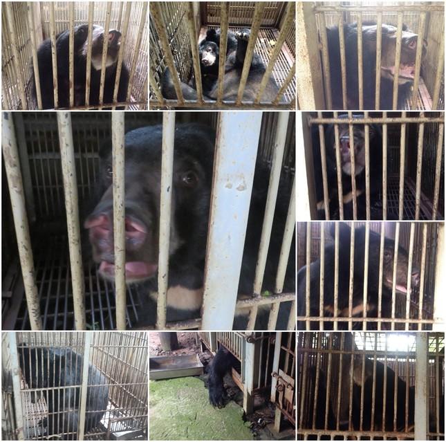 Hơn 11 giờ đồng hồ cứu hộ 9 cá thể gấu ảnh 4