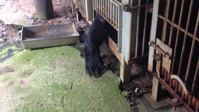Hơn 11 giờ đồng hồ cứu hộ 9 cá thể gấu ảnh 3