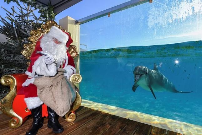 Tạm gác căng thẳng, thế giới tưng bừng đón Giáng sinh ảnh 15