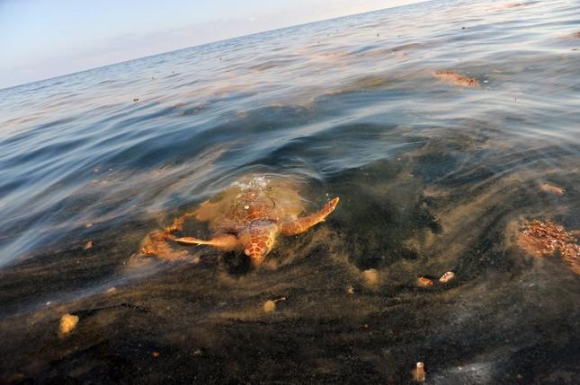Rùng mình những vụ xả thải gây ô nhiễm nước trên thế giới ảnh 2