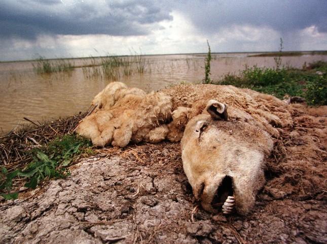 Rùng mình những vụ xả thải gây ô nhiễm nước trên thế giới ảnh 9