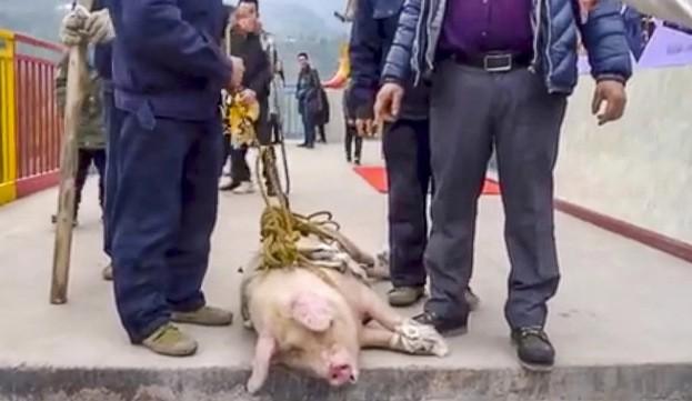 Công viên hứng chỉ trích vì thả lợn từ độ cao 70m ảnh 1