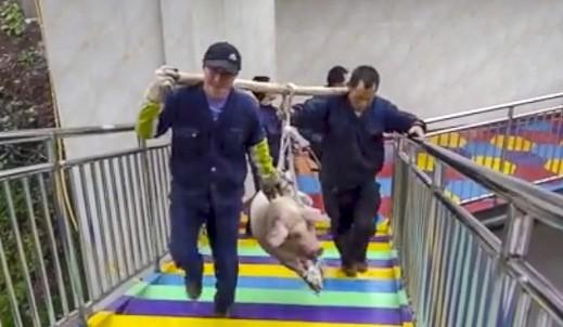 Công viên hứng chỉ trích vì thả lợn từ độ cao 70m ảnh 2