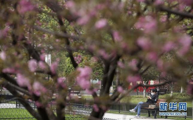 Vũ Hán: 'Mùa xuân trở lại' sau 65 ngày cửa đóng then cài vì COVID-19 ảnh 9