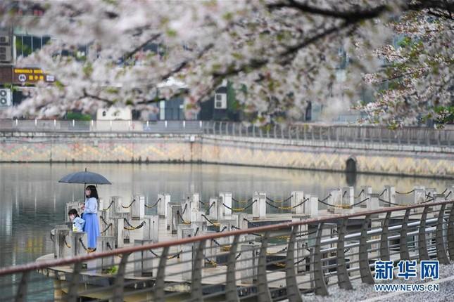 Vũ Hán: 'Mùa xuân trở lại' sau 65 ngày cửa đóng then cài vì COVID-19 ảnh 13